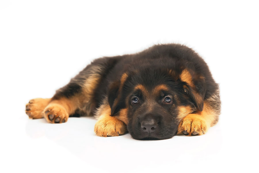 Spende für den Gnadenhof | Tierschutz für Tiere in Not | kvgd-stiftung.de