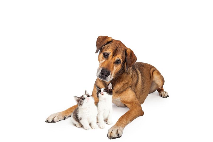 Hund und Katze | Soforthilfe für Tiere in Not | kvgd-stiftung.de