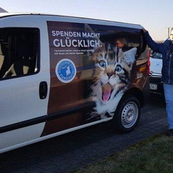 Bund der Katzenfreunde e.V. | News der Karin von Grumme-Douglas Stiftung für Tierschutz