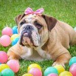 Frohe Ostern - Unser Blog rund um die Themen Tierschutz, Tierrechte und Soforthilfe !
