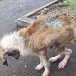 Rettung auf Mauritius gescheitert - Unser Blog rund um die Themen Tierschutz, Tierrechte und Soforthilfe !