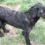 Naomi | Wir vermitteln bedürftige Tiere | Tierschutz