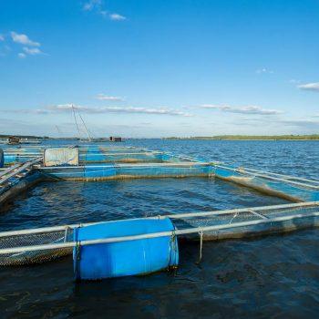 Aquakultur - Unser Blog rund um die Themen Tierschutz, Tierrechte und Soforthilfe !
