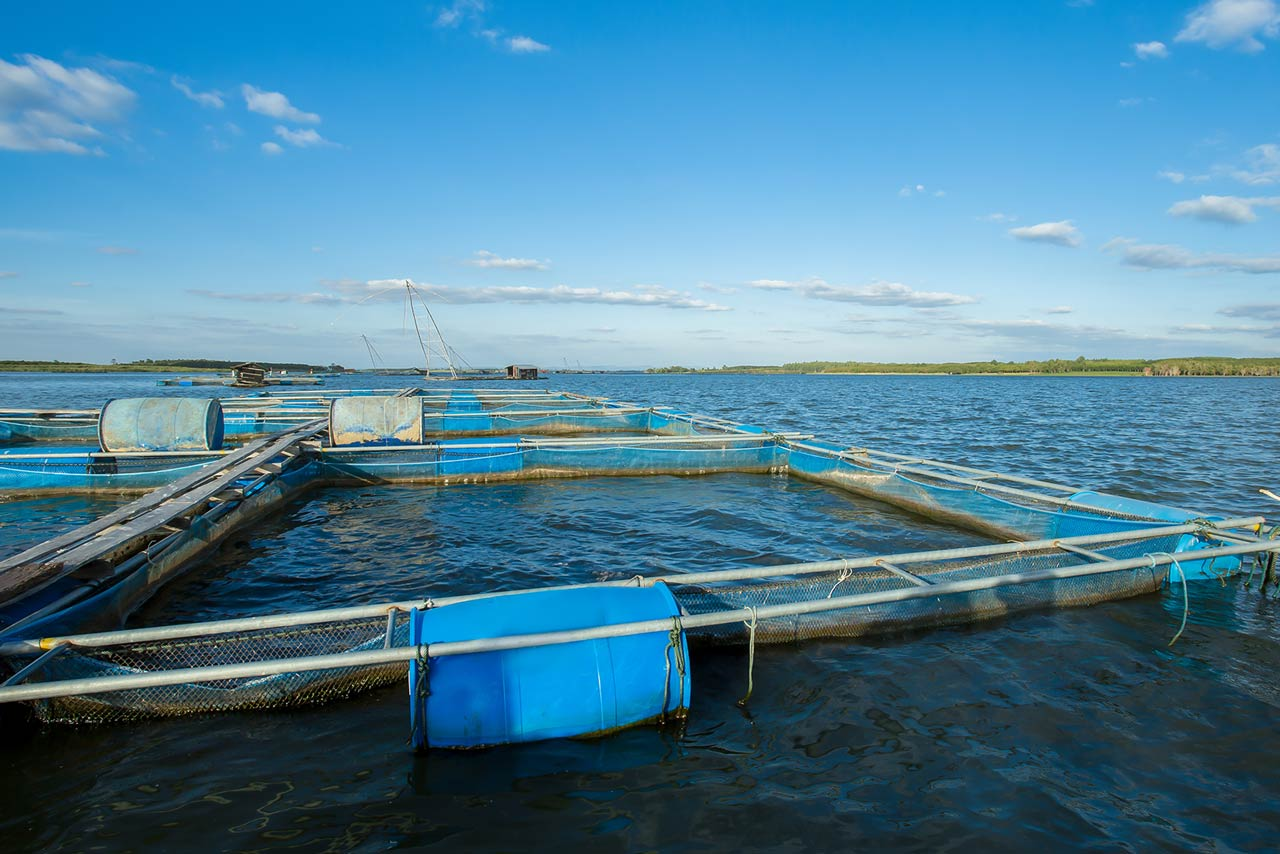 Aquakultur: Eine neue Form der Massentierhaltung