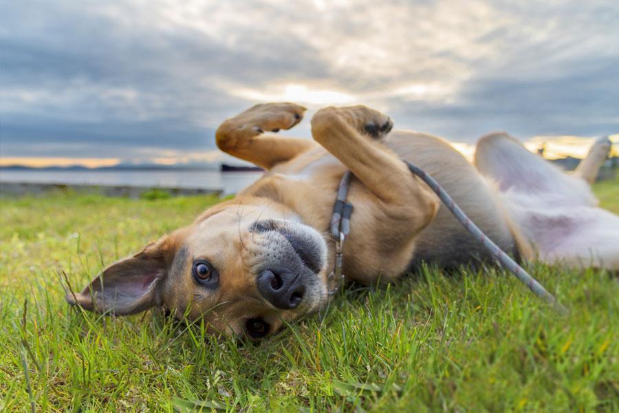 Tierschutz und Soforthilfe für bedürftige Tiere | Karin von Grumme-Douglas Stiftung | kvgd-stiftung.de