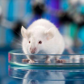 Botox Test an Mäusen - Unser Blog rund um die Themen Tierschutz, Tierrechte und Soforthilfe !