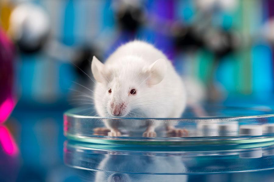 Botox Test an Mäusen: Tierleid für die Schönheit