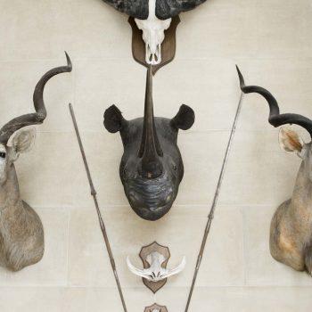 Großwildjagd -so geht effizienter Tierschutz - Unser Blog rund um die Themen Tierschutz, Tierrechte und Soforthilfe !