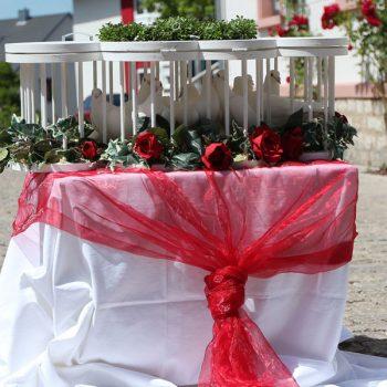 Hochzeitstauben Unser Blog rund um die Themen Tierschutz, Tierrechte und Soforthilfe !