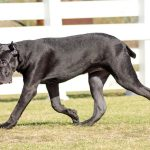 Hund kupiert | Unser Blog rund um die Themen Tierschutz, Tierrechte und Soforthilfe !