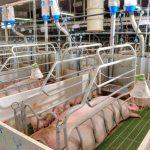 Kastenstandhaltung | Unser Blog rund um die Themen Tierschutz, Tierrechte und Soforthilfe !