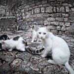 Kastrationspflicht für Katzen | Unser Blog rund um die Themen Tierschutz, Tierrechte und Soforthilfe !