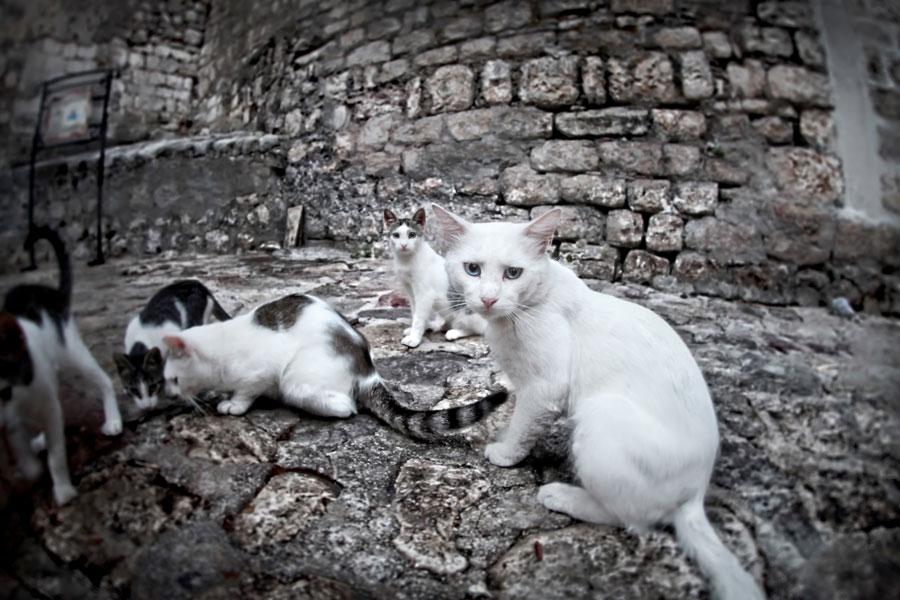 Kastrationspflicht für Katzen mit Freigang