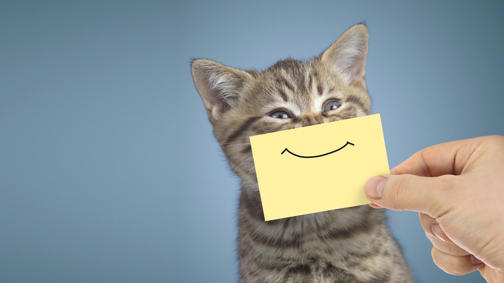 Pfotentafel – 10 Tonnen Katzenfutter eingetroffen