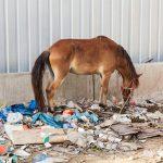 Tierquälerei | Unser Blog rund um die Themen Tierschutz, Tierrechte und Soforthilfe !