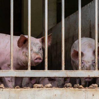 Tiertransporte | Tierrechte Unser Blog rund um die Themen Tierschutz, Tierrechte und Soforthilfe !