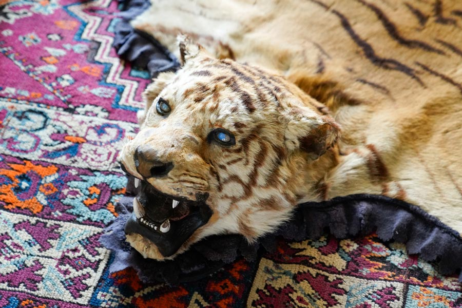 Der Tierhandel mit Tigern