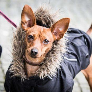 Hört die Liebe zum Tier an der Fleischtheke auf? Unser Blog rund um die Themen Tierschutz, Tierrechte und Soforthilfe !