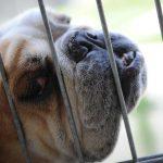 Viele Züchtungen sind eine Qual für das Tier - Unser Blog rund um die Themen Tierschutz, Tierrechte und Soforthilfe !