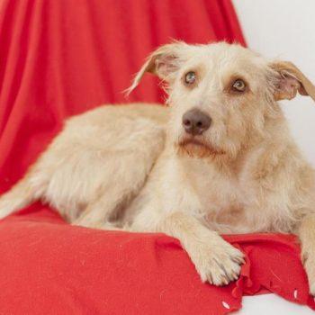 Was für eine Adoption von Tier-Senioren spricht - Unser Blog rund um die Themen Tierschutz, Tierrechte und Soforthilfe !