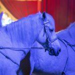 Tierschutz erforderlich: Das Leid der Zirkustiere - Unser Blog rund um die Themen Tierschutz, Tierrechte und Soforthilfe !