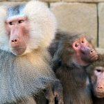 Zootiere - Unser Blog rund um die Themen Tierschutz, Tierrechte und Soforthilfe !