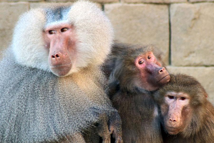 Tiergärten – Gefängnisse für die Tiere oder Artenschutz?